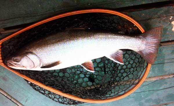 "June speck - 26"" 9lb caught off Bowman island dock as fishermen were unloading."